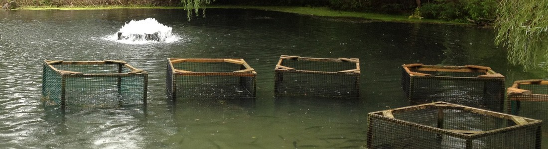 aquaculture aeration