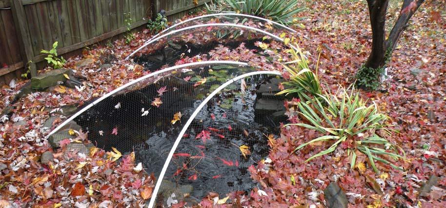 Fall Pond Closing