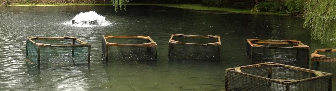 aquaculture aeration